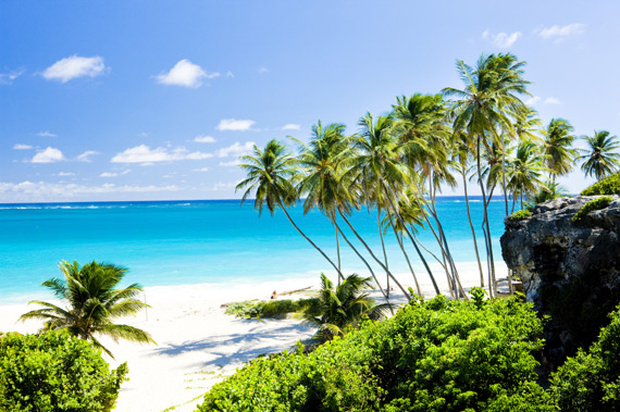 Beautiful Bottom Bay Beach lined with palm trees on the east cost of Barbados, Caribbean.
