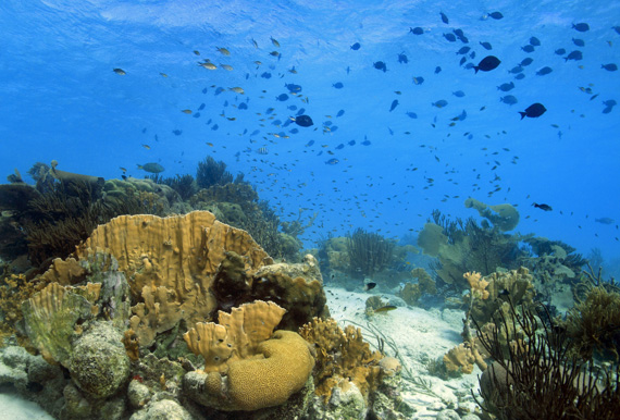 Beautiful coral reefs around Bonaire, Caribbean.